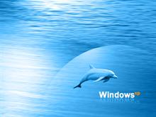 Sea and Dolphin
