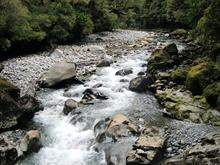NZ 139