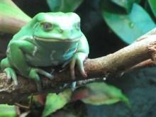 Frogboy Twin
