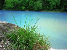 Nature Stills: Blue River