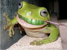 frogteeth