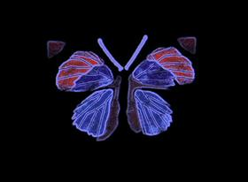 Blacklight Butterfly11