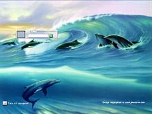 Surfin Dolphins