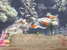 Aquarium Desktop Fish Pack #1