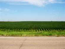 Rows of Soy
