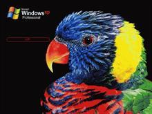 Bird XP