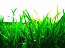 Grass bootskin
