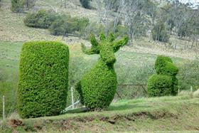 Topiary at St Peter's Pass