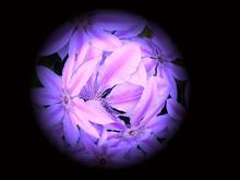 Flower Scope