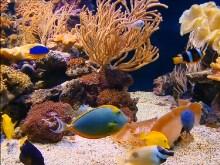 Aquarium Delite