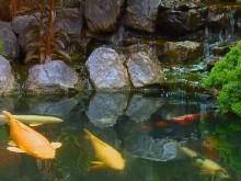 Koi Garden Falls