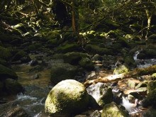 Moss Stream