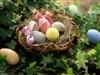 EasterNest