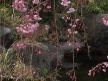 hanging garden pond