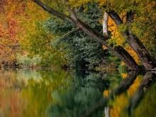 Autumnnice