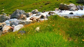 Mountain_Stream_Wild_Flowers