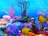 Colorful Aquarium CA3