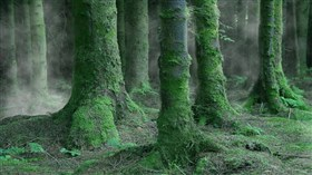 Irish Forest