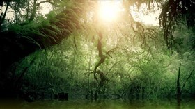 Fern_Forest_Afternoon_Sun